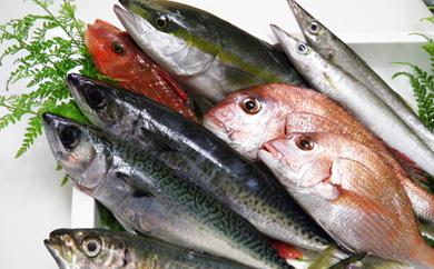 【期間限定】季節の便り!旬の高級魚詰め合わせ