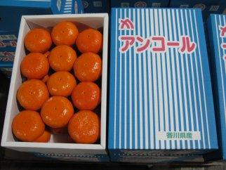 希少な果実!「アンコールオレンジ」5kg