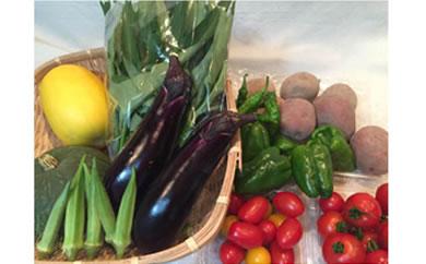 旬の野菜詰め合わせセット(8種類程度)
