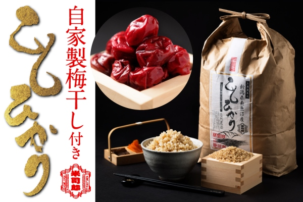 【玄米】自然農法/化学肥料不使用の魚沼産こしひかり10kg梅干付き