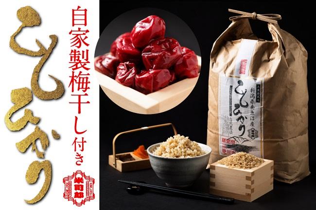 【玄米】自然農法/化学肥料不使用の魚沼産こしひかり5kg梅干付き