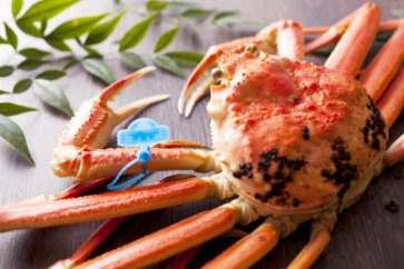 【数量限定200】魚政推奨 茹で松葉ガニ 小サイズ 1匹