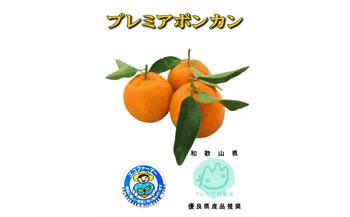 【10月1日受付開始予定】プレミアポンカン 4kg
