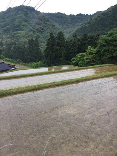 長崎県産 棚田新米天日掛け干しにこまる 5Kg