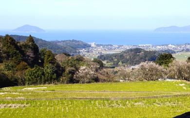 【数量限定】福吉産のお米定期便・にこまる・10kgを12回コース(頒布会)