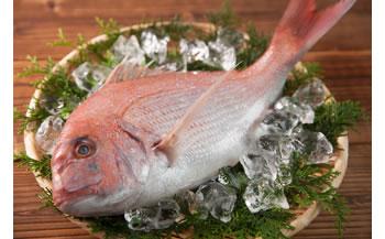 紀州天然祝い鯛