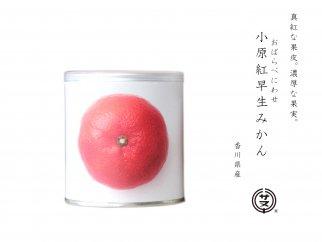 瀬戸内国際芸術祭2016モデル 小原紅みかん缶詰 12缶セット