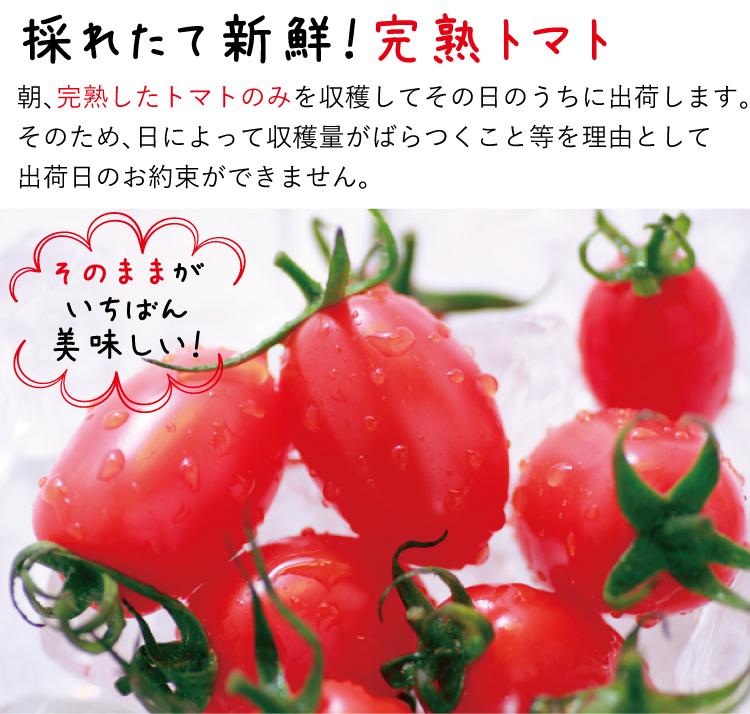 【完熟ミニトマト】アイコトマト_約3kg