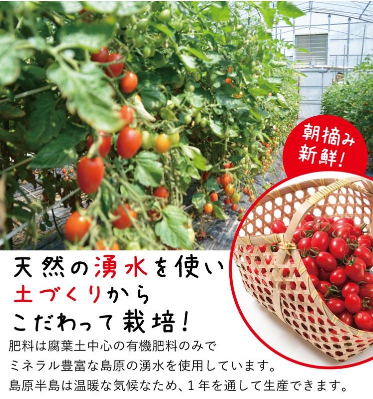 【完熟ミニトマト】アイコトマト1kg