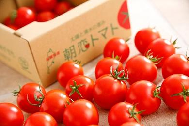 朝恋トマト(ミディトマト) 250g×6【AA01SM-C】
