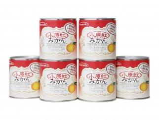 香川県産 小原紅みかん缶詰 6缶セット