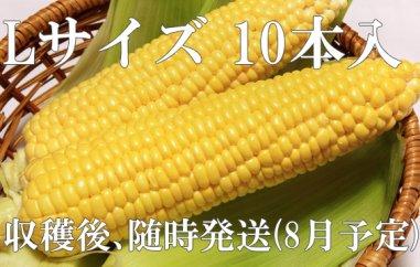 【期間限定】【数量限定】前田農園(北の百姓)とうもろこし(「ランチャー」極良質強甘味品種 Lサイズ10本入)