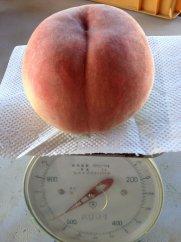 でっかい、甘い桃、食べらんしょ もも/「西王母」1.2kg(2玉)