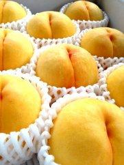 初めて出会う夢みる果実 もも/黄ららのきわみ1.6kg(4玉~5玉)