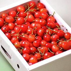 先行予約/さくらんぼ日和赤い宝石の愛しい果実さくらんぼ/佐藤錦(1kg箱/バラ)