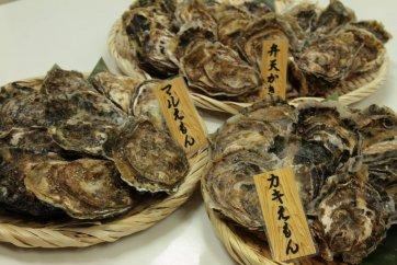 厚岸産『マルえもん』『カキえもん』『弁天かき』3種食べ比べセット