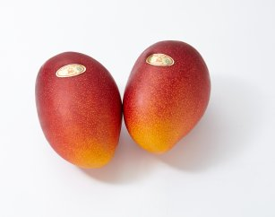 【先行予約】「鹿児島大崎べっぴんマンゴー」大2玉