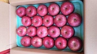 有機肥料・低農薬栽培のりんご(ふじ)の家庭用5kg箱