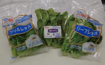 みりょく満点植物工場野菜詰合せ