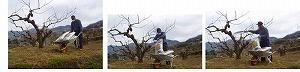 ★受付終了★【県認定エコファーマーからの贈り物】採れたてタネなし柿 2Lサイズ7.5kg
