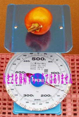 【全国1位の柿の産地からの贈り物】干柿用生渋柿3.5kg