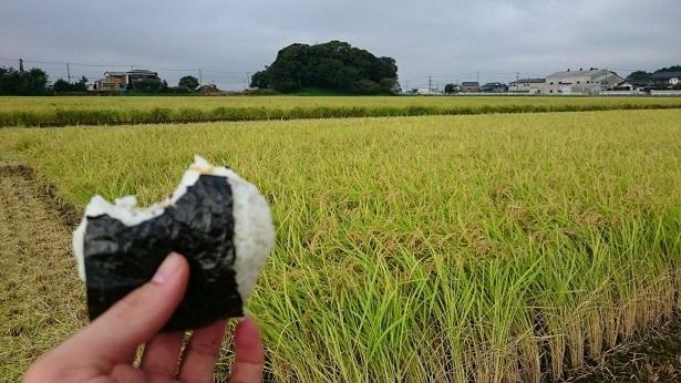 三百年続く農家の有機特別栽培コシヒカリ(精米5kg)
