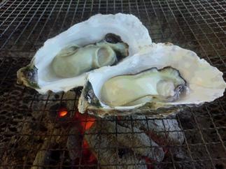 北九州市響灘産 若松妙見カキ(牡蠣)(加熱調理用)約2.5kg