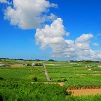 沖縄県八重瀬町のふるさと納税お礼の品1