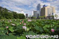 秋田市るるぶトラベルプランに使えるふるさと納税宿泊クーポン3,000円分