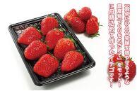 京都丹後産 完熟いちご(かおりの)4パック