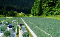 〈こと京都(こと京野菜)〉九条ねぎを味わう 鶏の葱鍋セット4人前