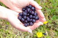 【数量限定】カルストの雫 ブルーベリー生果実<450g×2>