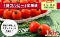 【定期便】福井市・坂井市・あわら市の農家がこだわった逸品!完熟トマト「越のルビー」食べ比べ!