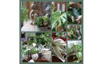 毎月届く植物の定期便「グリーンライフ12」<LotusGarden>