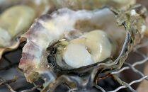 【まもなく受付終了】「訳あり」佐伯真牡蠣鶴見産シングルシードヴァージンオイスター1kg【生食可】