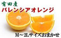 【爽快】有田産バレンシアオレンジ7.5kg(M~2Lサイズおまかせ)