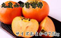 ☆先行予約☆[柿の名産地]九度山の富有柿約7.5kgサイズおまかせ【2021年10月下旬より発送開始】