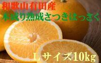 ☆先行予約☆こだわりの和歌山有田産木成り熟成さつき八朔10kg(Lサイズ)【2022年4月上旬より発送】