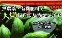 無農薬・有機肥料で大切に育てた青パパイヤ【大きめパパイヤ4玉程度】