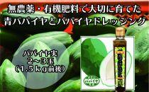 無農薬・有機肥料で大切に育てたパパイヤ(2-3玉1.5㌔前後)とパパイヤドレッシングのセット