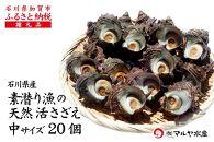 【加賀市・橋立港産】素潜り漁の天然物活さざえ詰合せ(20個:1個100~130g)
