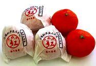 越冬小原紅早生みかん(個包装)約1.5kg
