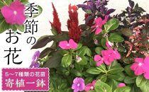 相生から季節のお花の寄植