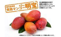 【ご家庭用(訳あり)】鹿児島県産完熟マンゴー<明宝>約2kg以上【2021年発送先行予約分】