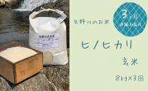 【定期便・全3回】矢野川のお米 ヒノヒカリ玄米8kgx3回