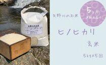 【定期便・全5回】矢野川のお米 ヒノヒカリ玄米5kgx5回