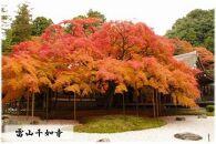 糸島市るるぶトラベルプランに使えるふるさと納税宿泊クーポン30,000円分