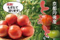 京都丹後産 完熟トマト(約4kg)
