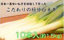 ~最高糖度20度以上!日本一甘く、繊維が柔らかいネギを目指して~小田農園の極甘白ネギ1.5kg(冷蔵)[1767R]