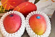 【2021年発送分】【大玉サイズ】お日様の恵み。奄美のあま~い絶品マンゴー(1.4kg/優品)